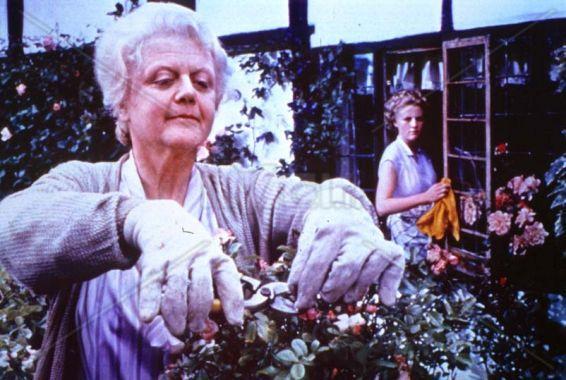 Buon compleanno signora in giallo ecco la gallery con i - Assassinio allo specchio ...